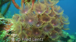 Cluster Duster, I took this photo today while decompressi... by Fred Lentz