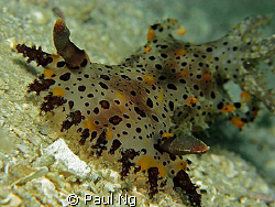 Rare Nudi In Perhentian. Taken with Canon G9 with strobe ... by Paul Ng