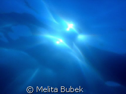 Looking for the Sun...f8, 1/800s by Melita Bubek