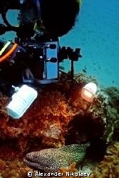 The underwater cameraman. Gulf of Oman, Daymaniyat Island... by Alexander Nikolaev