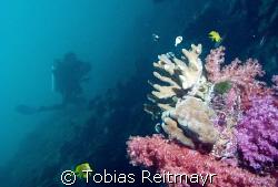 Diver gliding through reef, Anitas Reef, Similan Islands,... by Tobias Reitmayr