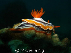 Taken with Sony W5, internal flash, in Tioman, Malaysia. by Michelle Ng