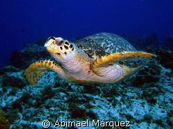 Happy Turtle, Cozumel by Abimael Márquez