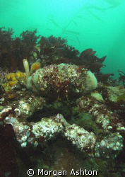 Decorator crab in Monterey Bay. Taken with a Sea and Sea ... by Morgan Ashton