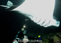 The Show. Kona, Hawaii. Manta night dive. Taken with a Se... by Morgan Ashton
