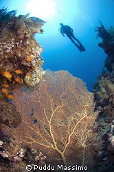 sharm el seik,ras mohamed,nikond2x 10,5mm 2 strobes by Puddu Massimo