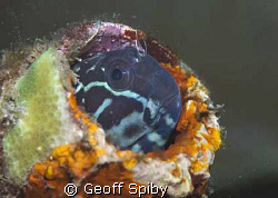 goby in a colourful bottle by Geoff Spiby
