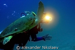Diver with green turtle.  by Alexander Nikolaev