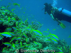 Me and other diver at Bodu Giri, Kuredu, Maldives by Svetoslav Dimitrov