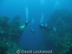 "Entering ""The Deep"". Columbia Deep, Cozumel, Mexico. by David Lockwood"