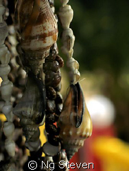 Strung Shell - Canon A640 by Ng Steven