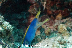 Blue Ribbon Eel, D70 by Larry Polster