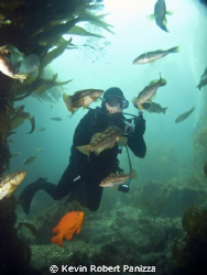 Underwater Photographer making eye contact with the local... by Kevin Robert Panizza