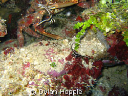 2 drum fish and a crab by Dylan Hopple