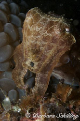 Cuttlefish showing off! Taken with a Canon EOS 20D, 60 mm... by Barbara Schilling