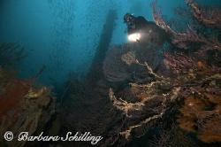 Corals on the Bianca C off Grenada. Unfortunately the viz... by Barbara Schilling