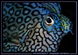 Blue Eyes.... :O) by Michel Lonfat