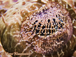Eye of a crocodile fish (Canon G9, Inon D2000, Inon UCL165) by Marco Waagmeester