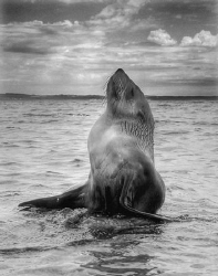 One of my most memorable marine life encounters. A baby s... by Cal Mero