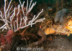 liked to setting  where the arrow crab was. The idea was ... by Roger Webb