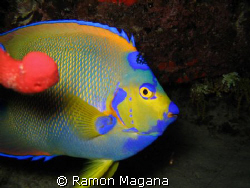 another one from a night dive... by Ramon Magana