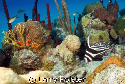 Spotted Drum, Little Cayman, D300 SIgma 14mm lens, twin I... by Larry Polster