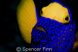 Image taken in Similan islands with a Nikon D80 and a 60m... by Spencer Finn