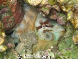 Hidden octopus by Todd Karberg