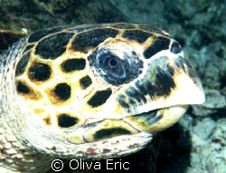 Tortue by Oliva Eric