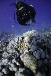Karin with 2 stonefish. Natural light. by Dray Van Beeck