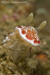 Nudi looking straight to my Canon 400D +100mm macro lens.... by Patrick Neumann