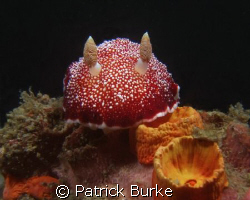 Taken in Lembeh with Fuji e900 by Patrick Burke