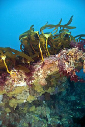 A photo of the unique and barely explored reefs of Melbou... by Cal Mero