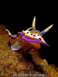jumping nudi by Volker Katzung