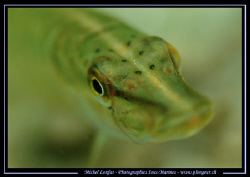 The Eye of the Baby Pike Fish... :O) by Michel Lonfat
