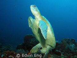 Underwater Toilet Break! Taken in Sipadan with Canon S80,... by Edvin Eng