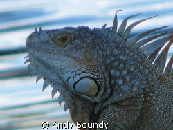 This guy was on the boardwalk by the canal. There are qui... by Andy Boundy