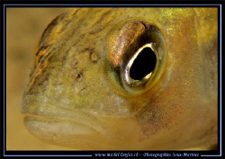 Face to face with this beautiful Pearch..... -----> ;o) by Michel Lonfat