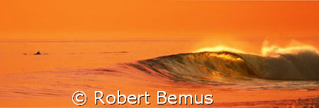 Dolphin and wave by Robert Bemus