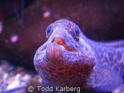 Juvenile  eel  by Todd Karberg
