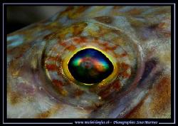 The eye of a Lezard Fish... :O) by Michel Lonfat