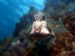Look at those lips, St. Croix by Mitch Bowers