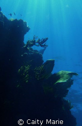 wall of reef off of Florida Keys.  No editing, just natur... by Caity Marie