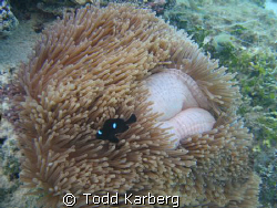 Have you ever had an anemone grow lips and smile at you? by Todd Karberg