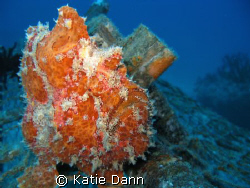 Frog fish, Similan islands, Thailand. Taken with Canon G9 by Katie Dann
