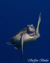 Ninja Turtle! by Steffen Binke
