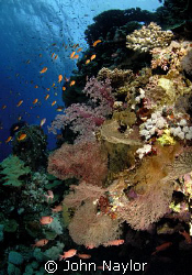 Red sea corals.Little Brother.Nik.D200 10.5 lens twin str... by John Naylor