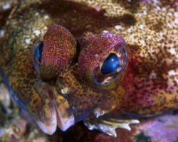 Eyes of Sole, San Miguel Island (F4, 105mmMacro, Velvia) by Andrew Dawson