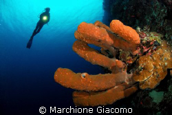 Big sponge and wall Nikon D200, 10,5mm lens ,two strobo ... by Marchione Giacomo