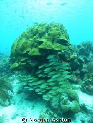 Coral Scene in Bonaire. The lack of strobe lighting was n... by Morgan Ashton
